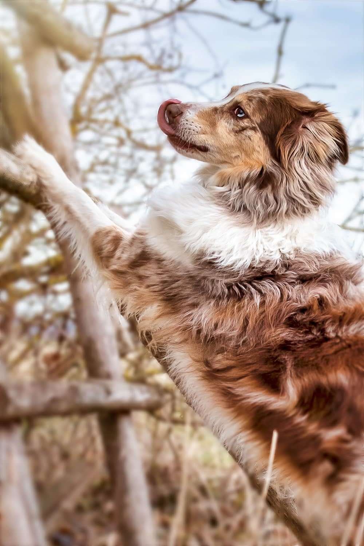 tier foto hund shooting ansbach muenchen nuernberg erlangen Fürth